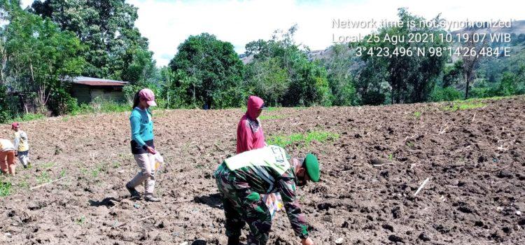 Babinsa Koramil 08/TB Membantu Petani di Desa Kuala Dalam Menanam Bibit Jagung